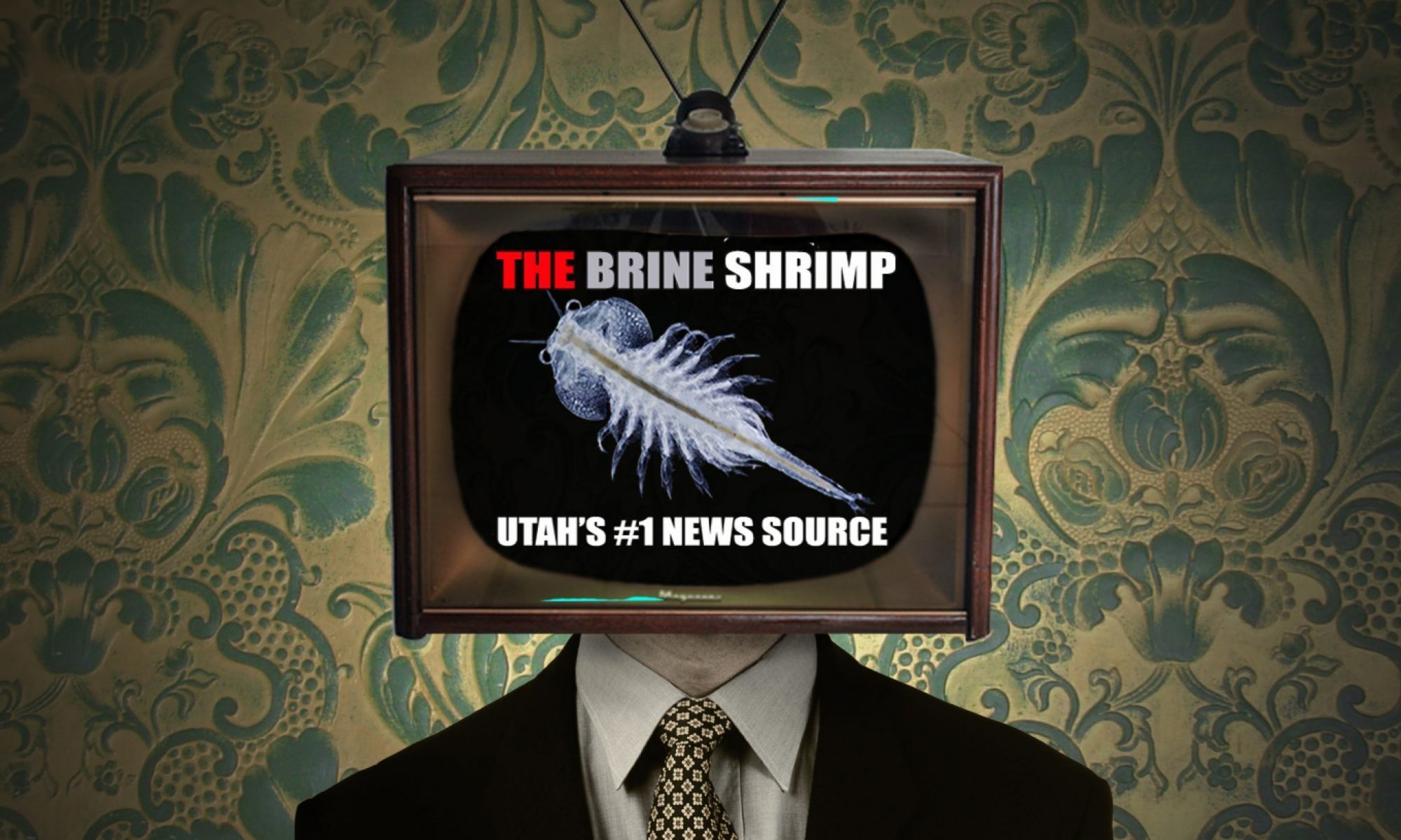The Brine Shrimp